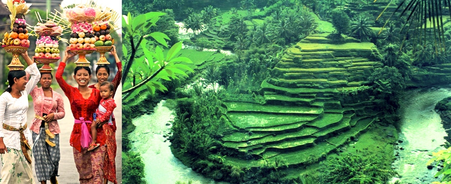Bali Women Green rice