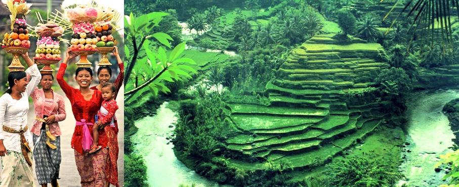 Bali-Women-Green-rice1